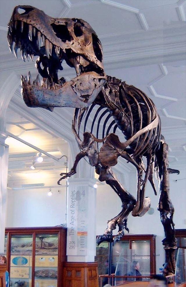 ティラノサウルスの骨