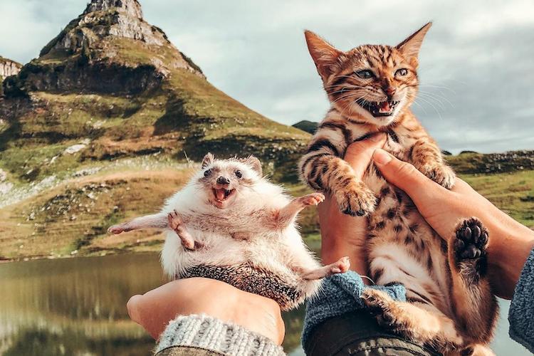 笑顔が最高にカワイイ!ハリネズミのハービーと猫ちゃんがInstagramで大人気!