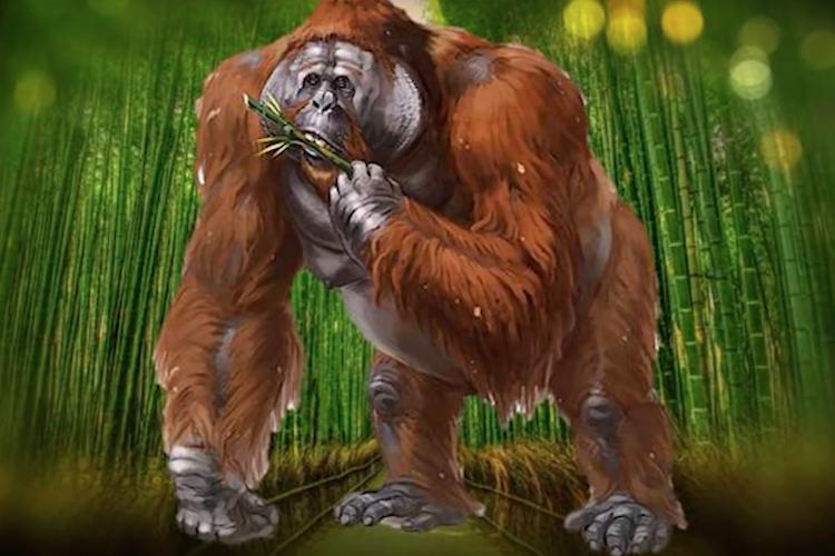史上最大の霊長類「ギガントピテクス」って何?人間の祖先なの?