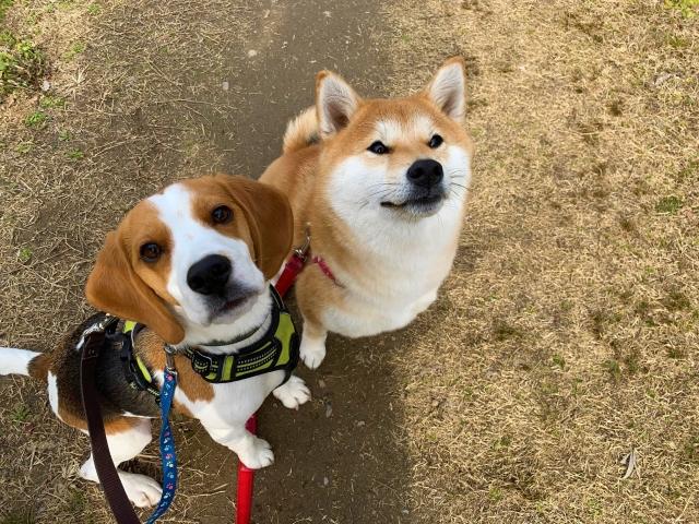 可愛い犬たち