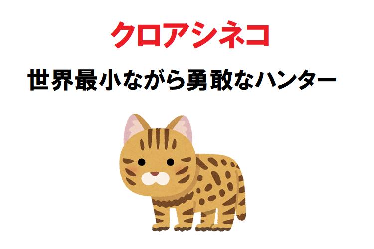 世界最小の猫「クロアシネコ」は勇敢なハンターだった!