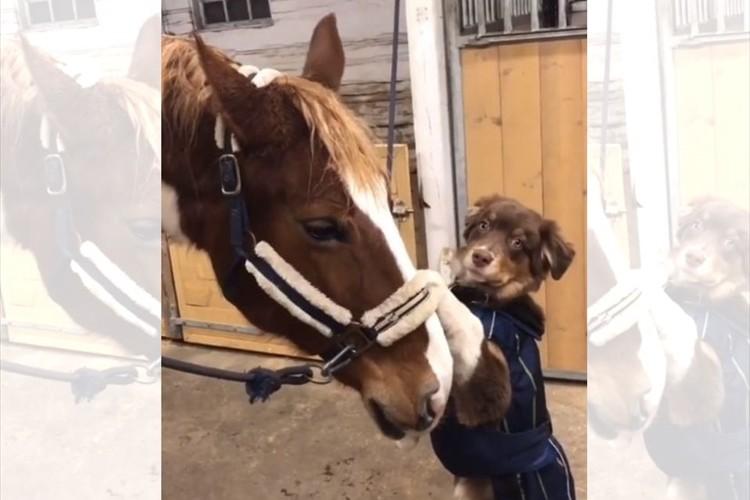 種を超えた友情にほっこり。仲良しの馬に飛びつき、つかまることに成功すると・・この表情(笑)