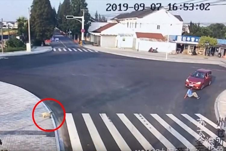 横断歩道のない所を歩いて車にひかれた男性。その一方でしっかり横断歩道を歩くワンコが話題に