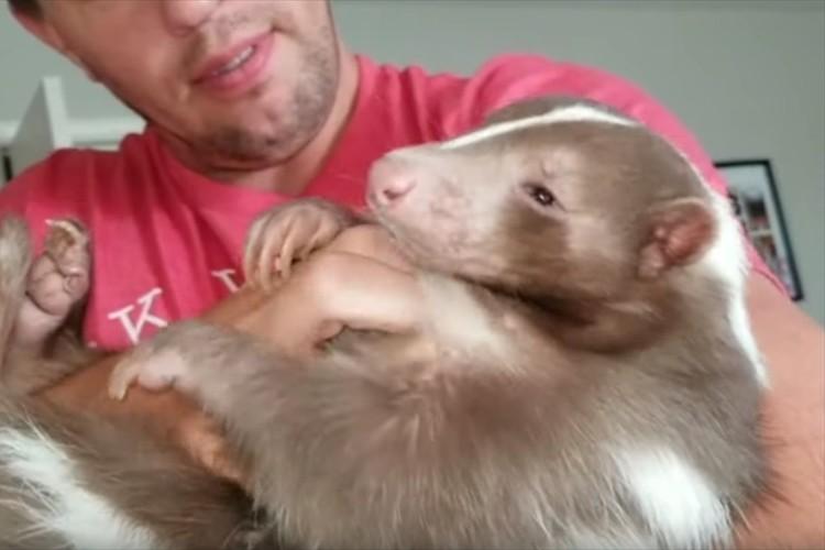 大好きな飼い主さんに抱っこされてうっとり・・めちゃめちゃ懐いているスカンクが可愛らしい!