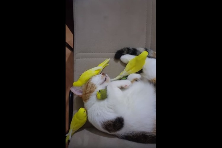 鳥たちと一緒に寝ることが大好きなニャンコ。腕でギュッと抱きしめる様子が幸せそう