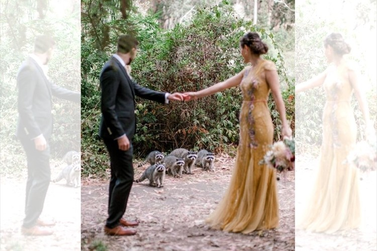 アライグマの家族が結婚式に参列!?ウェディングフォト撮影中に可愛いハプニングが発生!