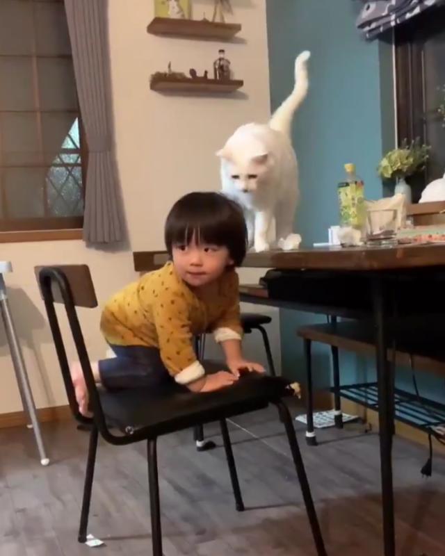 テーブルに上がろうとする子どもを制止するネコ、その姿が完全にプロのシッターさんだった!
