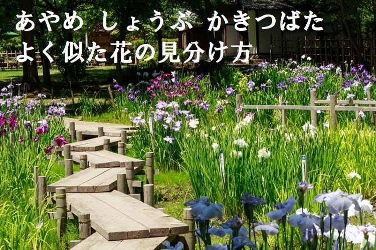 「あやめ」と「しょうぶ」に「かきつばた」、そっくりな花たちの見分け方をご紹介!