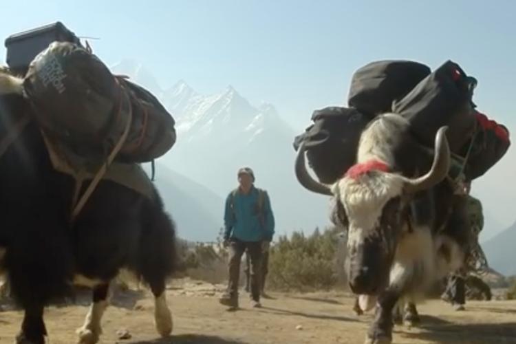 エベレスト登山には欠かせない少数民族「シェルパ族」が凄い!