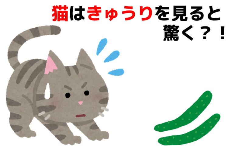 動画で話題!猫はなぜきゅうりに驚くのか?猫の優れた身体能力についても解説