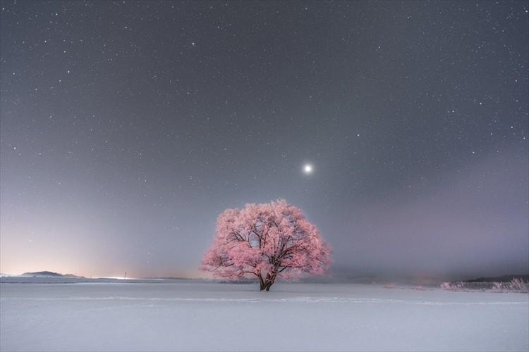 冬に咲く桜?偶然が重なって生まれた奇跡の光景に反響「車のテールランプがここまで反射するとは」