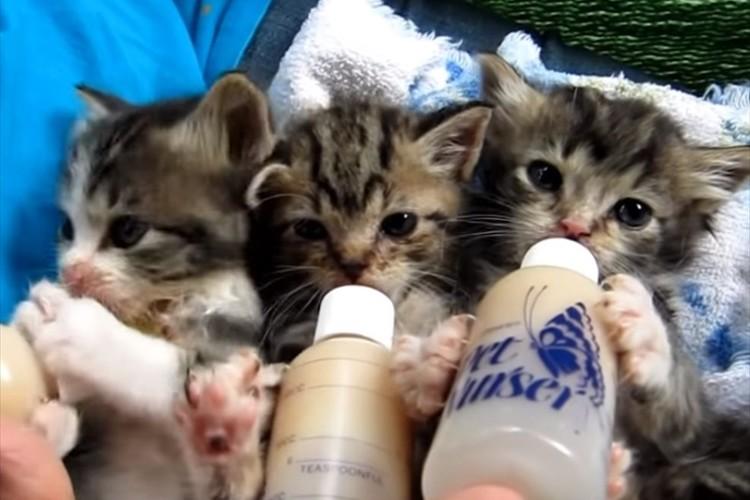 生まれたばかりの3匹の子猫。くっつきながら、ミルクを夢中に飲む様子が可愛すぎる!