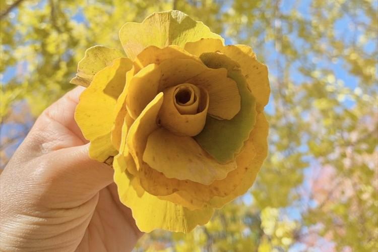 バラのようにまとめたイチョウの葉が美しいと話題に!「コサージュにしたくなりますね」