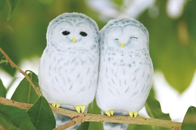 北海道・厚真神社の守り神として人気のフクロウがマグネットに!ふわふわの2羽がピタッとくっつく