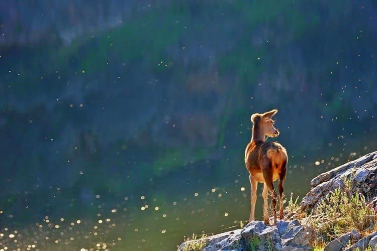 【動物の寿命図鑑】寿命が長い動物ランキングをご紹介!気になる1位は・・!?