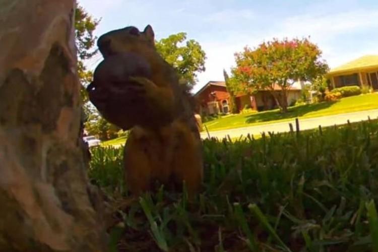 赤ちゃんリスが木から落下!すぐ救出に現れる母リスの行動がカッコイイ