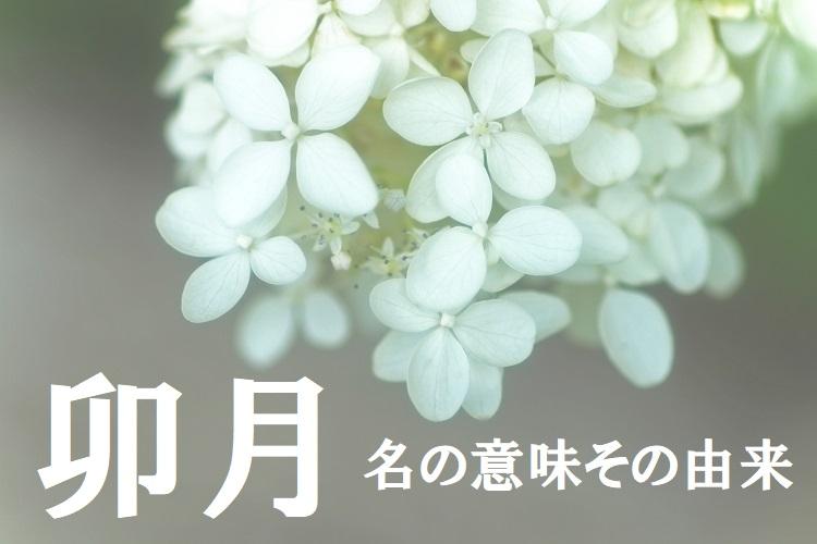 旧暦で4月を意味する「卯月(うづき)」、その由来は十二支の「卯」とはまた違うものだった!