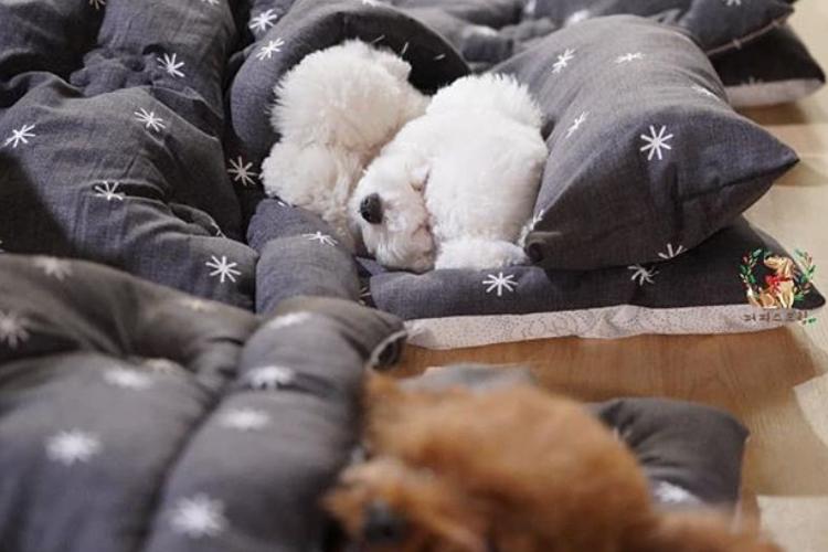 【犬の保育園】ちっちゃな布団に入ってお昼寝するワンコたちが超カワイイ!