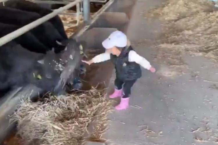 可愛いちびっ子農家さん♪牛に餌やりする娘の働きっぷりが凄くてずっと見ていたい!