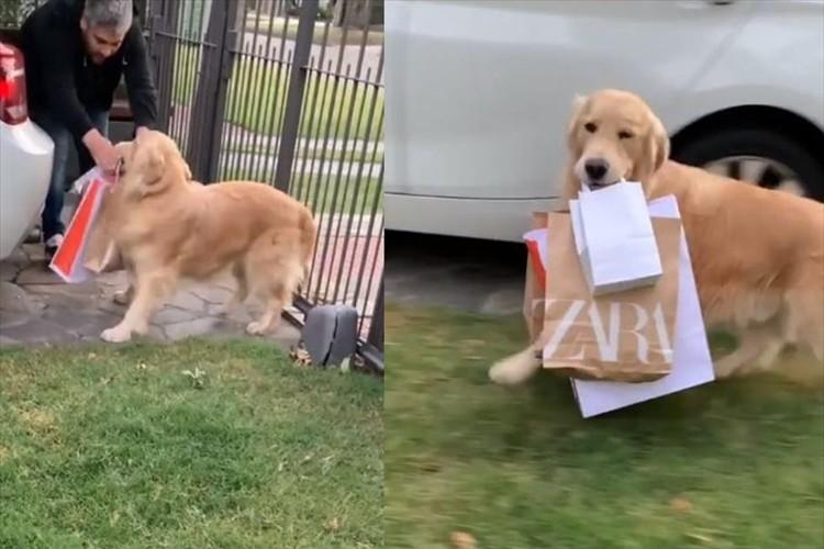 飼い主さんも大助かり!買い物袋を家の中へとせっせと運んでいくワンコが賢くて可愛い!