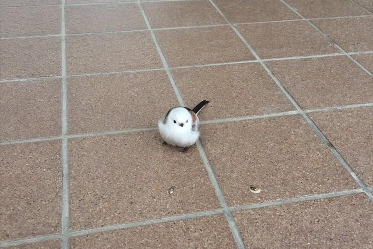 「北海道の特権ですね」郵便局の入口で雪の妖精とも言われる『シマエナガ』が発見されて話題に!
