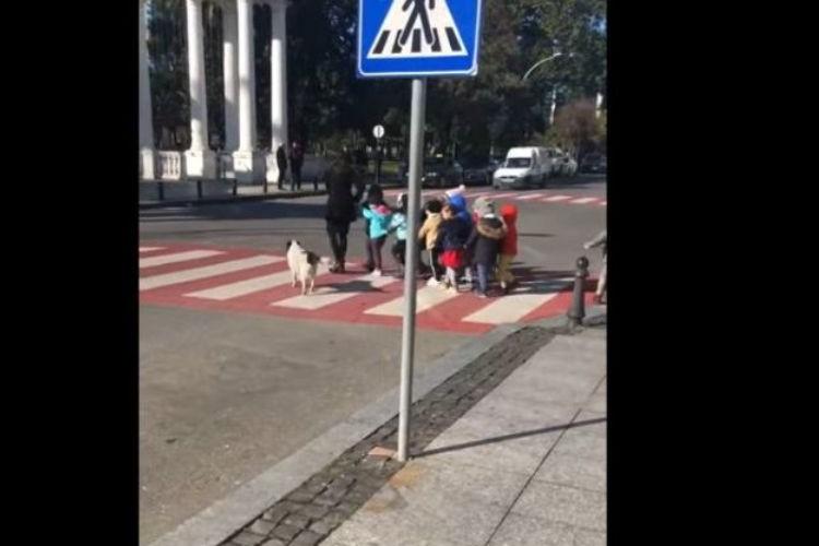 みんなの安全はボクが守るワン!横断歩道で幼稚園児たちをガードする野良犬が話題に