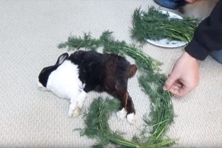 ぐっすり眠っているウサギを餌で囲んでいくと・・起きた瞬間のリアクションに笑った!