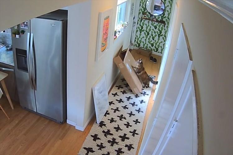 ニャンコはやっぱり狭い所が大好き!天井のカメラがとらえたニャンコの行動の一部始終が面白い!