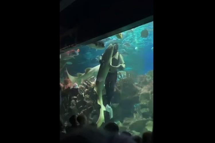 身をまかせてラブラブ!?ダイバーがサメと優雅にダンスを踊る驚きの光景が話題に!