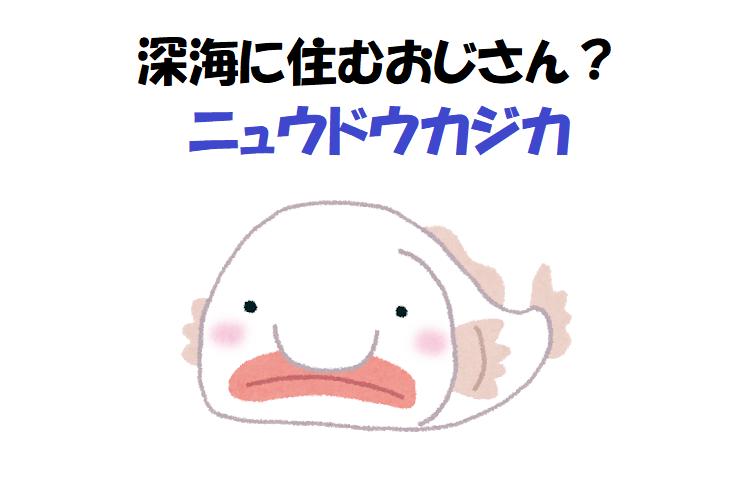 おじさんみたいな深海魚!?「ニュウドウカジカ」ってどういう魚?