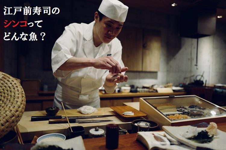 江戸前寿司の高級魚「シンコ」ってどんな魚?