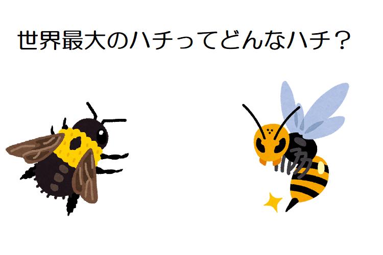 【ウォレス・ジャイアント・ビー】世界最大の蜂はオオスズメバチではなく、幻の存在といわれた蜂だった!