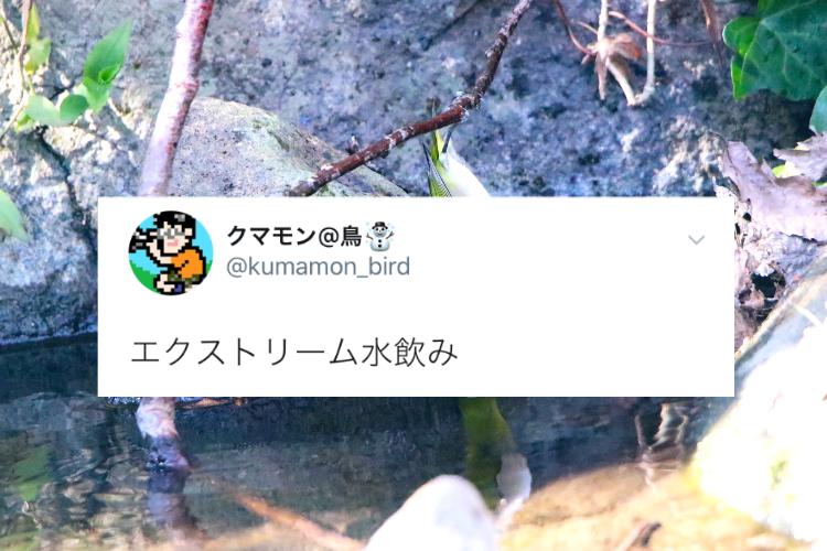 どんな体勢!?木に足を引っかけて「エクストリーム水飲み」するメジロを目撃