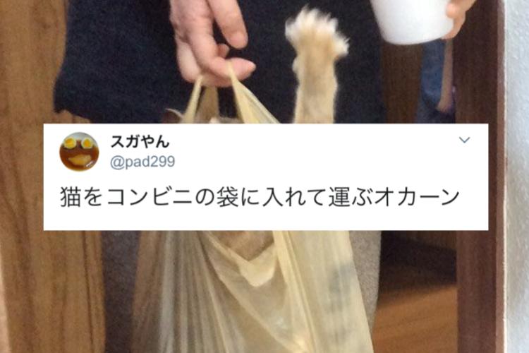 コンビニ袋の中はお弁当・・・ではなくニャンコ!オカンの猫の運搬方法が斬新すぎる(笑)