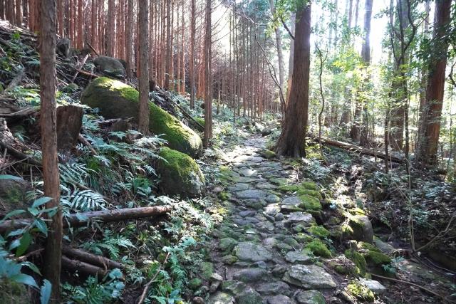 owashihinoki