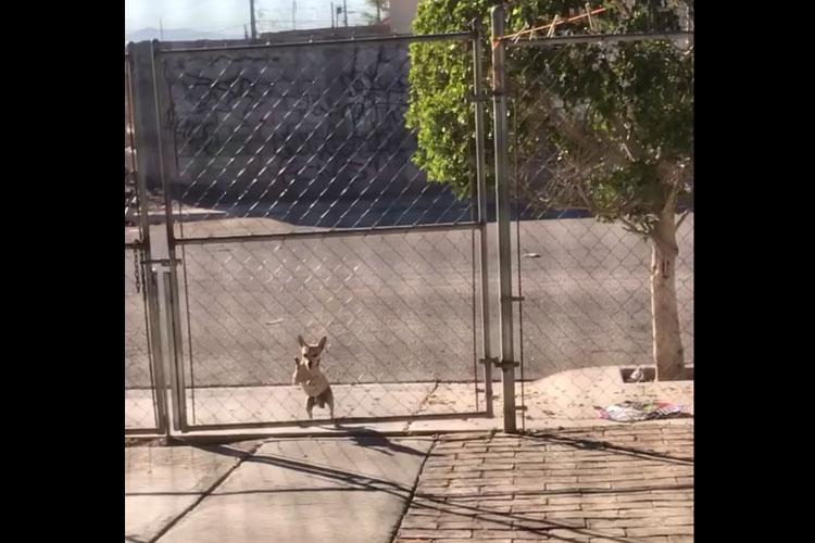 大きなフェンスを自力で乗り越えた子犬。一体どうやって!?