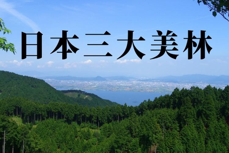 【日本三大美林】美しい林「天然美林」と「人工美林」6カ所をご紹介