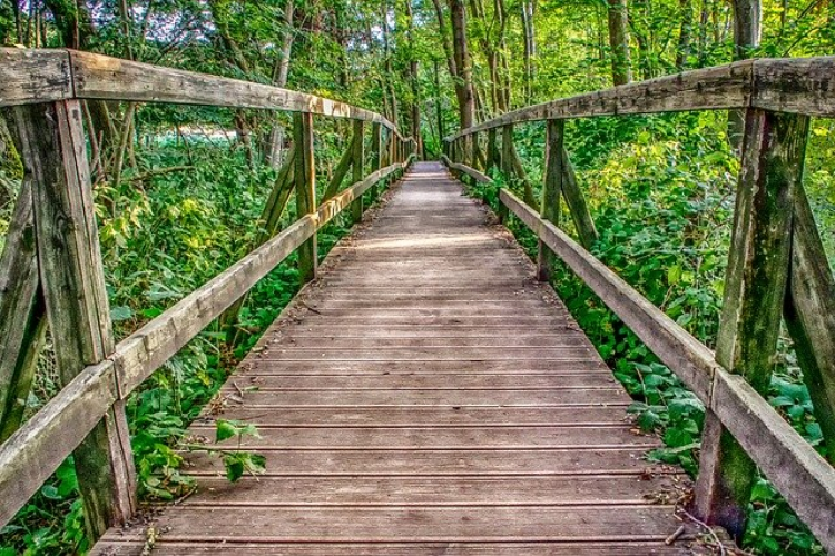 「日本三大奇橋」って知ってる?古の匠たちによって築かれた独特な橋たち