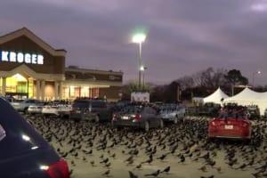 おいおいこの世の終わりかよ・・・大量の黒い鳥がスーパーの駐車場を占拠!世にも恐ろしい光景が話題に