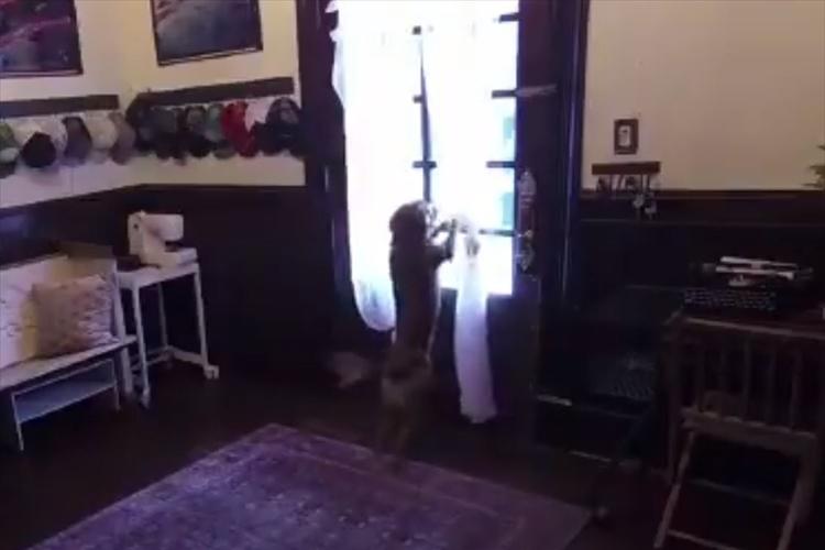 女性宇宙飛行士が約1年ぶりに帰宅!飼い主との再会に全身全霊で喜びを爆発させる愛犬