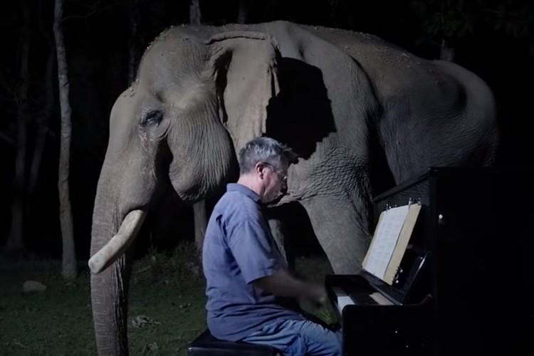 右目の視力と牙を失ったゾウの心を癒すため、そばに寄り添ってピアノを弾く男性