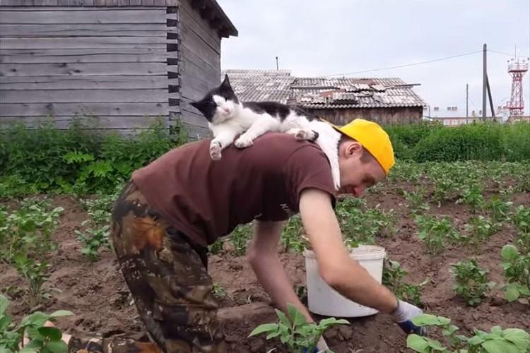 「居心地のいい背中だニャン」草むしりする男性の背中で思いっきりくつろぐニャンコ