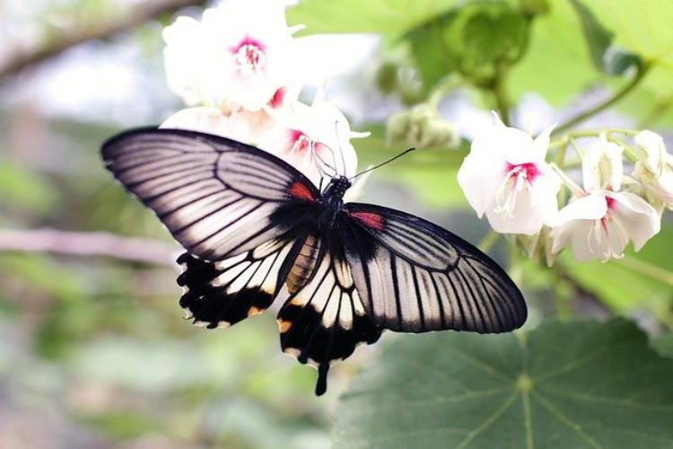 蝶の数え方は匹や羽ではなく「頭」が正式!?いったいなぜ?