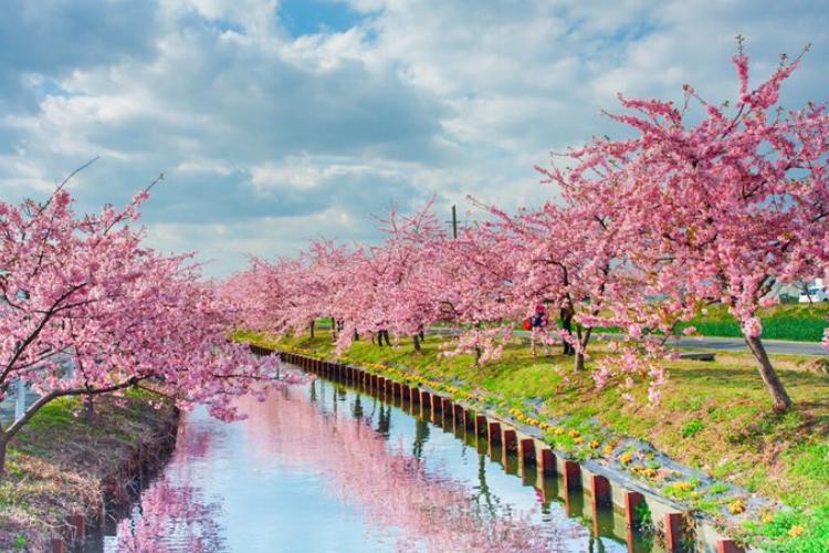 まるで絵画みたい!三重県の桜並木を撮影した写真がめちゃくちゃ美しいと話題に