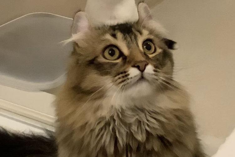 えっ猫から猫が生えてる!?偶然撮れたミラクルな写真が面白カワイイと大人気
