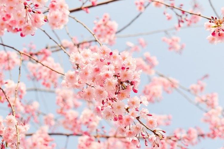 春に咲くのは桜やチューリップだけじゃない!美しく咲く春の花をご紹介