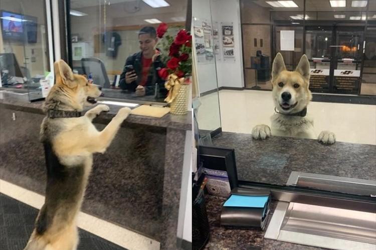 飼い主さんとはぐれちゃった!?警察署にやってきたワンコの姿が人間のようだと話題に!