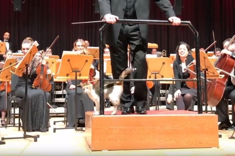 オーケストラの演奏会に野良猫が乱入!可愛がられ追い出されることもなく演奏開始(笑)
