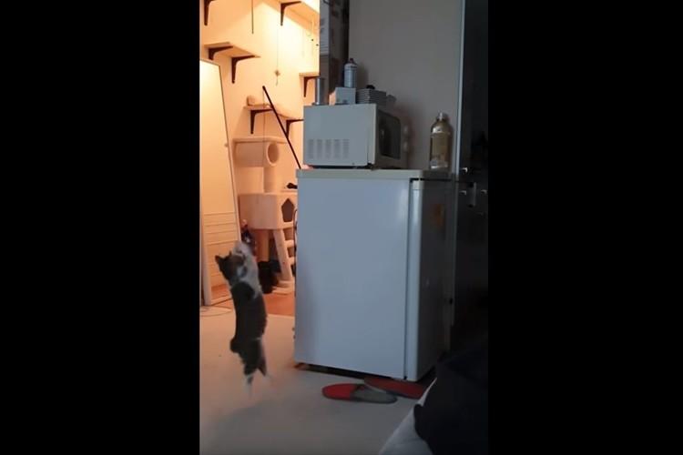 オモチャが取れなくなって困っていると姉の猫が登場。あっさり解決しクールに立ち去っていった(笑)