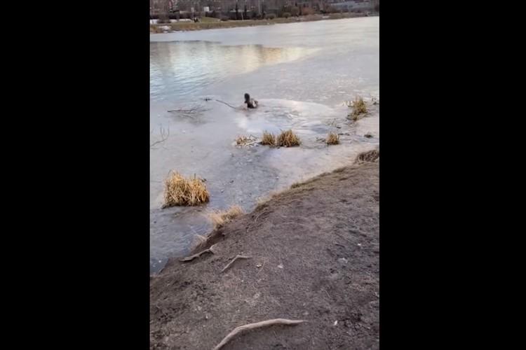 凍った湖に落ちて身動きできなくなった愛犬を助けるため、飼い主がTシャツ1枚になって救出へ!